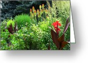 Canna Greeting Cards - Canna Lily Garden Greeting Card by Gretchen Wrede