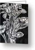 Canna Greeting Cards - Canna Lily Guangzhou China Greeting Card by Joy Neasley