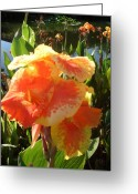 Canna Greeting Cards - Canna Lily Light Greeting Card by Warren Thompson
