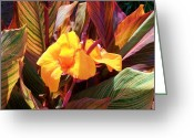Canna Greeting Cards - Canna Greeting Card by Raymond Robinson