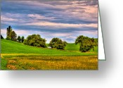 Farm Fields Greeting Cards - Canola Among the Wheat II Greeting Card by David Patterson