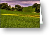 Rapeseed Greeting Cards - Canola and Wheat Greeting Card by David Patterson
