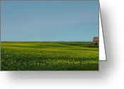 Estephy Sabin Figueroa Greeting Cards - Canola Farm Greeting Card by Estephy Sabin Figueroa