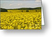 Rape Greeting Cards - Canola Field Greeting Card by Heiko Koehrer-Wagner