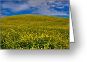 Rapeseed Greeting Cards - Canola Field in the Palouse Greeting Card by David Patterson
