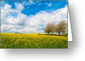 Rapeseed Greeting Cards - Canola Field Panorama Greeting Card by Christopher Elwell and Amanda Haselock