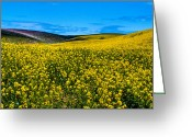 Rapeseed Greeting Cards - Canola Hills in the Palouse Greeting Card by David Patterson