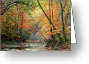Brown Frog Greeting Cards - Canopy of Color II Greeting Card by Robert Harmon