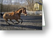 New England Digital Art Greeting Cards - Canter Greeting Card by Jack Goldberg