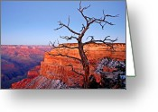 Bare Tree Greeting Cards - Canyon Tree Greeting Card by Peter Tellone