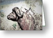 Amimal Greeting Cards - Cape Buffalo Greeting Card by Arne Hansen