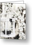 Dogwood Blossom Greeting Cards - Captured Spring in Black and White Greeting Card by Stephanie Frey