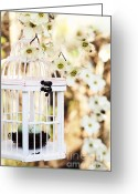Dogwood Blossom Greeting Cards - Captured Greeting Card by Stephanie Frey