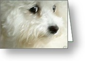 Westie Greeting Cards - Cara Greeting Card by Gun Legler