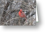 Winter Trees Photo Greeting Cards - Cardinal 1 Greeting Card by Vijay Sharon Govender