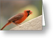Tropical Island Greeting Cards - Cardinal bird Maui Hawaii Greeting Card by Pierre Leclerc
