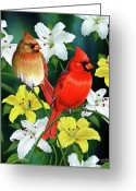 Birds Painting Greeting Cards - Cardinal Day 2 Greeting Card by JQ Licensing
