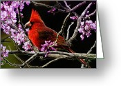 Cardinal Greeting Cards - Cardinal in Bloom Greeting Card by Bill Tiepelman