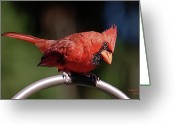 Peering Greeting Cards - Cardinal in Oils Greeting Card by DigiArt Diaries by Vicky Browning