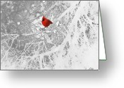 Red Bird Greeting Cards - Cardinal In Winter Greeting Card by Ellen Henneke