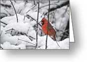 Cardinal Greeting Cards - Cardinal Male 3669 Greeting Card by Michael Peychich