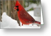 Cardinals. Wildlife. Nature. Photography Greeting Cards - Cardinal Profile Greeting Card by Jennifer Wosmansky