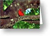 Red Birds Greeting Cards - Cardinal Visit Greeting Card by Adele Moscaritolo