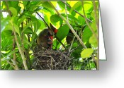 Cardinals. Wildlife. Nature. Photography Greeting Cards - Cardinals Caterpillars Greeting Card by Al Powell Photography USA