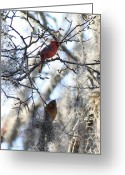 Red Bird Greeting Cards - Cardinals in Mossy Tree Greeting Card by Carol Groenen