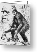Theory Of Evolution Greeting Cards - Caricature Of Charles Darwin, 1871 Greeting Card by Science Source