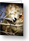 Poecile Carolinensis Greeting Cards - Carolina Chickadee Greeting Card by Lana Trussell