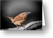 Selective Color Greeting Cards - Carolina Wren Greeting Card by Bonnie Barry