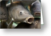Fisheye Greeting Cards - Carp Greeting Card by Jane Rix