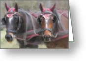 Carriage Team Greeting Cards - Carriage Horses Pleasure Pair Greeting Card by Connie Moses