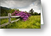 Fuchsia Greeting Cards - Carvers Gap Roan Mountain State Park Highlands TN NC Greeting Card by Dave Allen
