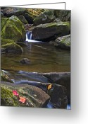 Maple Photographs Greeting Cards - Cascade At Jones Gap Greeting Card by Rob Travis