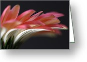 Flower Over Black Photo Greeting Cards - Cascade Greeting Card by Juergen Roth