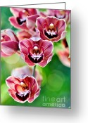 Orchids Photo Greeting Cards - Cascading Miniature Orchids Greeting Card by Kaye Menner