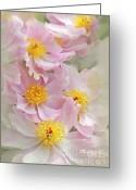 Pink Peonies Greeting Cards - Cascading Pink Peony Flowers Greeting Card by Jennie Marie Schell