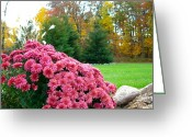 Fall Scenes Greeting Cards - Cascading Pinks Greeting Card by Randy Rosenberger