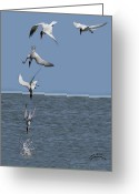 Tern Greeting Cards - Caspian Tern Composite Greeting Card by Jack Sutton