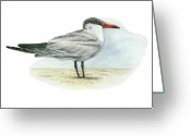 Tern Greeting Cards - Caspian Tern Greeting Card by Lionel Portier