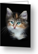 Kittens Digital Art Greeting Cards - Cassiopeia  Greeting Card by Julie L Hoddinott