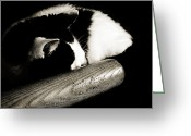 Fine Art Cat Greeting Cards - Cat and Bat Greeting Card by Andee Photography