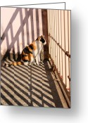 Playful Kitten Greeting Cards - Cat and shadow Greeting Card by Suwit Ritjaroon
