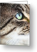 Kittens Digital Art Greeting Cards - Cat Art - Looking For You Greeting Card by Sharon Cummings