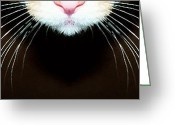 Cat Eyes Greeting Cards - Cat Art - Super Whiskers Greeting Card by Sharon Cummings