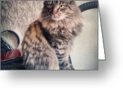 Petstagram Greeting Cards - #cat #cats #pet #katze #petstagram Greeting Card by Valery Ivanov
