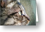 Petstagram Greeting Cards - #cat #cats #petstagram Greeting Card by Valery Ivanov