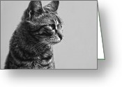 Hdr Look Photo Greeting Cards - Cat Greeting Card by Chelaru Catalin Ionut